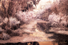 Swamp in infrared