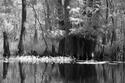 East Texas bayou scene
